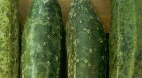 Virus. La courgette sur la sellette
